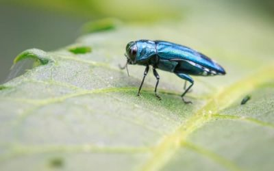 Signs of Borer Insects