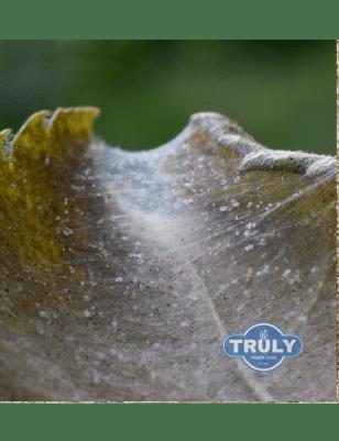 Spider Mites Treatment
