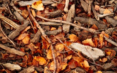 How To Prevent Bark From Falling Off Your Trees