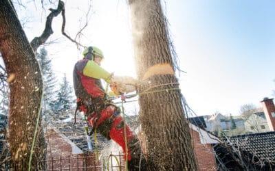 Arborist And Tree Surgeon